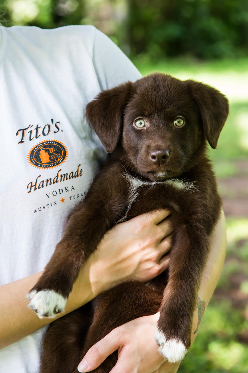 Tito's Vodka for Dog People Campaign Photo